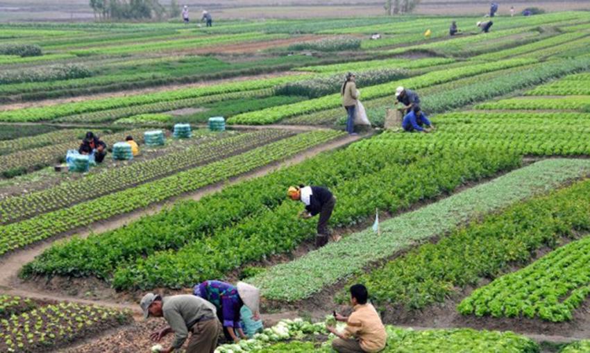 कृषिमा विदेशी लगानी भित्र्याउने निर्णय फिर्ता लिन आग्रह